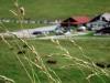 Au col des Aravis 07-2003 (1)