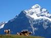 Grindelwald-Eiger