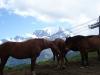 chevaux-au-mont-darbois