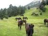 chevaux-en-vercors-1