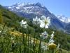 fleurs-de-prairies-2