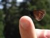 papillon-sur-doigt