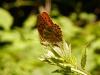 papillon-sur-ronce