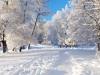 paysage-hiver (5)